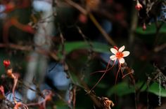 This is a macro photography so you can see this tiny coral flower at a larger scale with beautiful details.