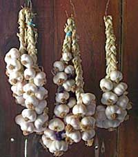 braid your garlic for drying