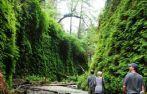Went last summer. Beautiful! Hike to Fern Canyon - James Irvine Trail, Trinidad/McKinleyville/Orick, Humboldt County, California