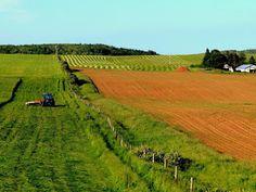 Fields, Prince Edward Island. Photo by Bernadeta Milewski
