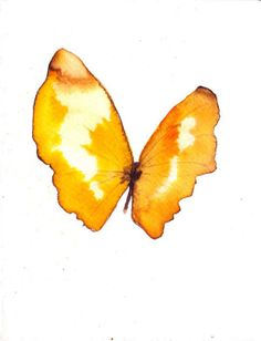 spring yellow butterfly original watercolour and ink painting