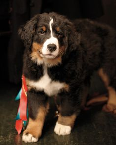 Mid-reception, Marnie's parents gave the couple a Bernese Mountain Dog pup they named Winter.