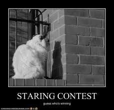 You gotta love cats.at least for laughs Funny Cats, Funny Animals, Cute Animals, Creepy Animals, Animal Funnies, Funny Jokes, Funny Cat Pictures, Funny Photos, Animal Pictures