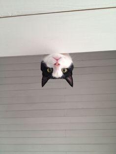 Here, kitty kitty.