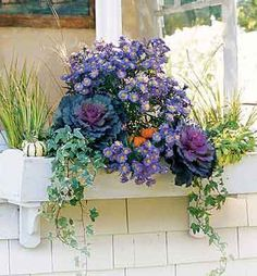 Decor Amore: Window Box Love!   Purple Asters and Kale look great with orange
