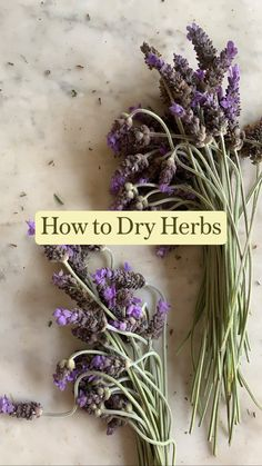Herb Garden, Garden Plants, House Plants, Healing Herbs, Medicinal Plants, Herbal Magic, Different Plants, Flower Farm, Drying Herbs