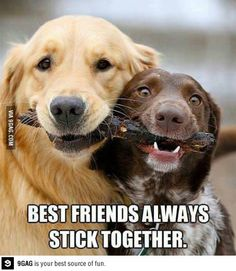Best friends always stick together :D