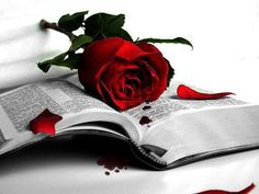Book and Red Rose