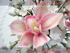 How to Orchid