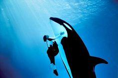"""""""A proteção dos animais faz parte da moral e da cultura dos povos.""""  (Victor Hugo)"""