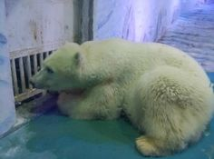 The ''world's saddest zoo'' is in the Grandview Shopping Mall in Guangzhou, China. Conditions at the Grandview do not even come close to meeting any internationally recognised standards. Take action to help these animals!