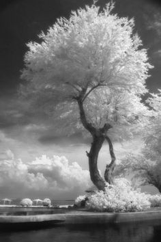 the tree is reaching for the sky