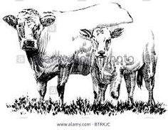Resultado de imagen para cow and calf