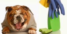 Quem tem animal de estimação precisa manter a casa muito bem limpa para evitar que o cheiro dos bichinhos impregne a casa. As dicas são simples e fáceis de fazer! DICA 1: PANO DE CHÃO Tenha panos de limpeza específicos para os animais. NÃO limpe a casa com o mesmo pano de chão que você enxuga…