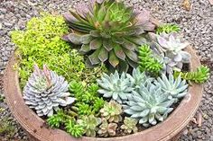 Image result for succulent containers