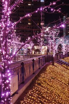 Illuminations along the Meguro River, Tokyo.  (I was there just a few months ago.  I want to see this one day!)