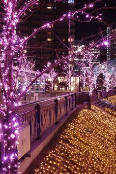 Illuminations along the Meguro River, Tokyo
