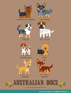 460 Ideas De Nonys Project Perros Mascotas Cosas Para Perros