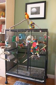 A conure whose cage is too small could develop behavioral issues, such as screaming or plucking. Check out these good examples of conure cage setups. Conure Cage, Conure Bird, Parakeet Cage, Cockatiel Cage, Monk Parakeet, Bird Cage Design, Diy Bird Cage, Bird Cages, Parrot Perch