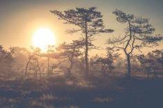 Sunrise at teijo National park