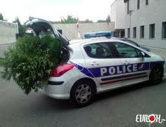 cannabis police - Google Search