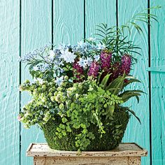 Indoor Container Gardening Ideas: A green, mossy basket imitates a moist, fertile forest floor.