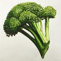 #기초디자인 #상명대 #그림 #입시미술 _ ㅎㅎ Plant Illustration, Botanical Illustration, Botanical Drawings, Botanical Prints, Broccoli Drawing, Food Drawing, Sketch Painting, Fruit Art, Art Portfolio