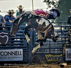 Bareback Riding, Bucking Bulls, Rodeo Cowboys, Rodeo Life, Bull Riders, Horse Saddles, Cultural, Horse Pictures, Cowgirls