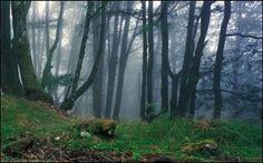 El Señorío de Bertiz (Navarra) es un Parque Natural de unas dos mil hectáreas en el que los bosques de robles son los auténticos protagonistas; también hay alisos, hayas y castaños. El Parque tiene un bonito jardín con especies exóticas de diferentes lugares del mundo, también un Centro de Interpretación de la Naturaleza.