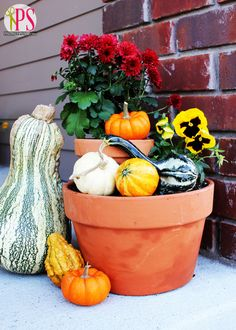 So you have all the supplies for a beautiful fall display, but you just don't know how to put your mums, pansies, and pumpkins together in a clever display. Let Amy from Positively Splendid show you how it's done! || @splendidamy