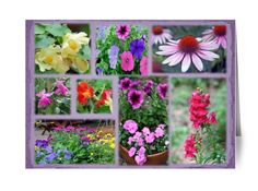 Boxed 5 x 7 Greeting Cards w/envelope from featured photographs in ~ Our Backyard Garden ~ Flowers PHOTO BOOK SERIES http://www.blurb.com/b/4129742-our-backyard-garden-flowers As low as $1.92 each
