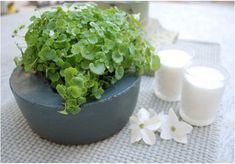 I fiori e le piccole piante ornamentali ma anche le erbe aromatiche e profumate sono parte della nostra vita, che siano in casa o in giardino, decorano e rallegrano l'ambiente creando atmosfere sem…