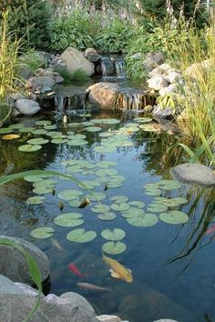 Lago com peixes no jardim DIY