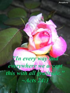 "Flowery Blessing: ""In every way and everywhere we accept this with all gratitude."" ~ ACTS 24:3 (ESV)"