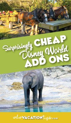 Sometimes it is the extras that can just add that extra something special to your vacation. Here are some the cheap Disney add ons.