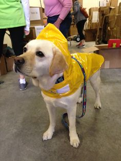 This patient lab got fitted for a new Up Country Nantucket Slicker. Looking good!