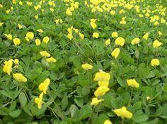 CASA SOLUTION | Cada jardim tem a grama que merece.