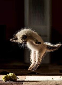 Cute Cats And Kittens, Cool Cats, Kittens Cutest, Cute Baby Animals, Funny Animals, Animals Images, Farm Animals, Cute Cats Photos, Funny Cat Photos