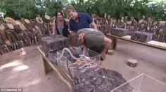 Cricket legend Shane Warne bitten on the head by anaconda ..