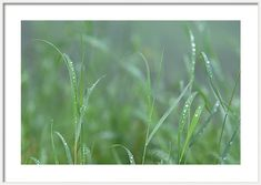 Jenny Rainbow Fine Art Photography Framed Print featuring the photograph Green Grass With Droplets by Jenny Rainbow Art Prints For Home, Fine Art Prints, Framed Prints, Framing Photography, Fine Art Photography, Hanging Wire, Green Grass, Green Colors, Fine Art America
