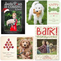 33 Best Dog Christmas Cards Ideas Images Holiday Photo Cards