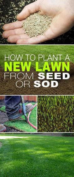 How To Plant a New Lawn From Seed or Sod! Starting a new lawn from seed or sod isnt complicated its just a bit of elbow grease and some simple steps. Click thru to see the steps and tips! Treatment Projects Care Design home decor Growing Grass From Seed, Planting Grass Seed, How To Plant Grass, How To Grow Grass, Landscaping Supplies, Backyard Landscaping, Landscaping Ideas, Modern Backyard, Landscaping Company
