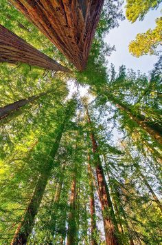 Redwood trees put everything in to perspective!!=)