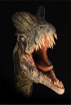 Dilophosaurus, up close and personal