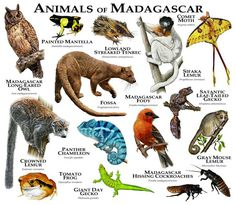 How to draw animals of Madagascar