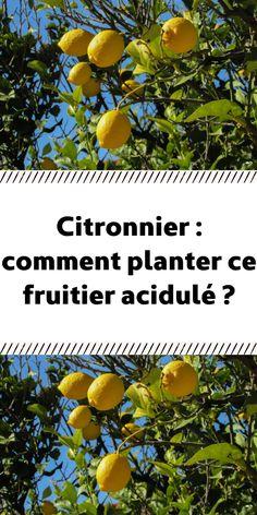 Comment Planter, Potager Garden, Plantation, Vegetable Garden, Planters, Vegetables, Permaculture, Gardening, News