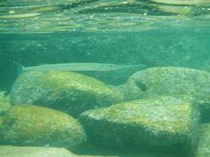Fotos submarinas