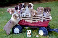 That's a wagon full of business