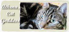 Athena, Cat Goddess  #cats #catblog