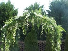 Classic wedding arch with plumosa fern and orchids